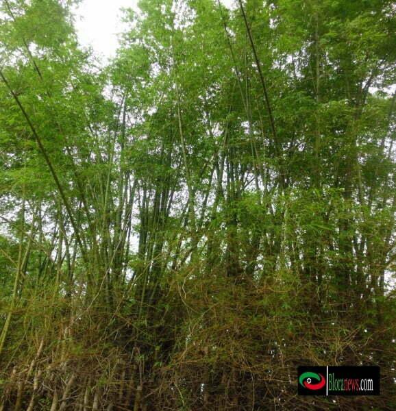 bambu sebagai bahan pembuatan kepang