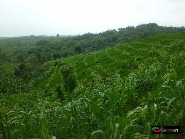 Hamparan lahan hutan