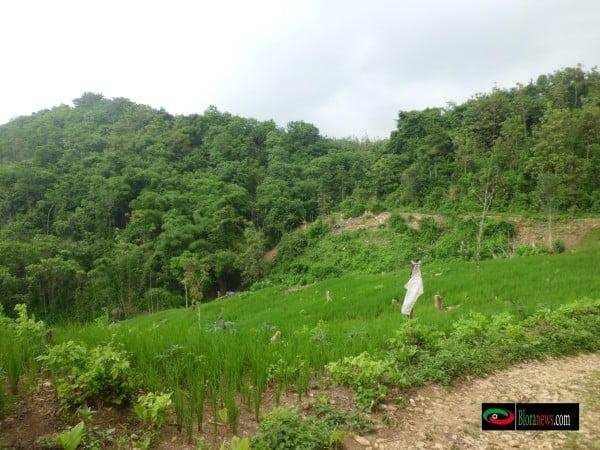 Hutan yang di manfaatkan petani