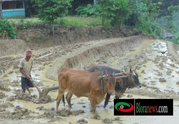 pertanian bogorejo dan potensinya