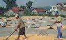 Jagung salah satu komoditas pertanian kecamatan jepon
