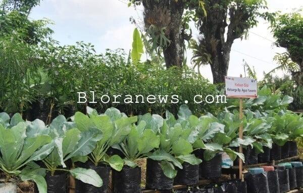 pemanfaatan lahan pekarangan