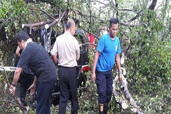 angin kencang yang melanda kota Solo menumbangkan sejumlah pohon