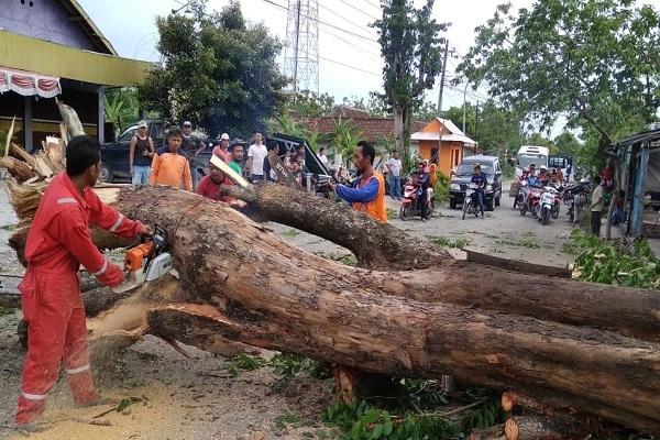 Kerusakan akibat angin kencang yang menerjang sebagian kawasan Blora pada Jumat (16/11) pukul 16.00 WIB sampai 16.30 WIB