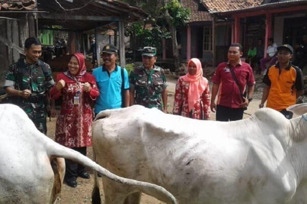 Dua ekor sapi dari Bupati Blora tersebut diserahkan oleh Kepala Dinas Peternakan dan Perikanan,