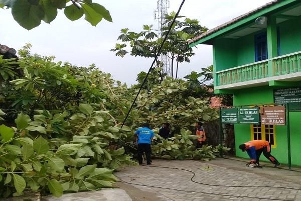 Petugas BPBD Blora mengevakuasi pohon tumbang di jalan Cendana, lorong 4 Kelurahan Beran, Kecamatan Blora Kota, Blora