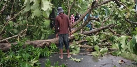 Pohon tumbang di daerah Kecamatan Kradenan