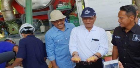 Dirjen PKH Kementan RI, I Ketut Diarmita menunjukkan jagung yang telah dikeringkan menggunakan Mobile Corn Dryer (MCD)
