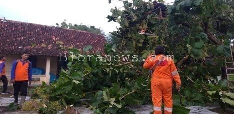 Tim BPBD Kabupaten Blora mengevakuasi pohon tumbang akibat angin kencang di Desa Jomblang Kecamatan Jepon, Blora