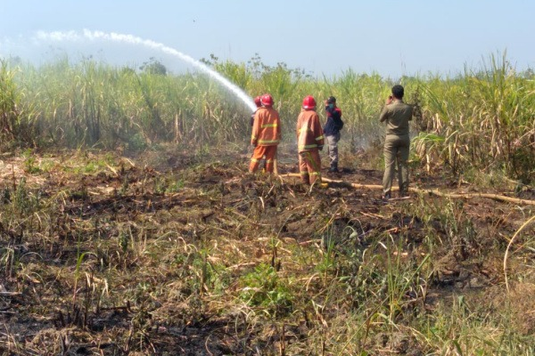 Kebakaran kebun tebu