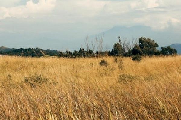 Pertanian padi di Blora mengalami puso lantaran kemarau panjang
