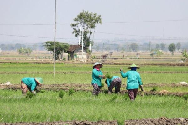Petani di Desa Ketuwan Kecamatan Kedungtuban Kabupaten Blora memulai tanam padi