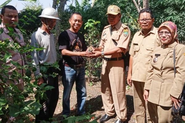 Tim Cethik Geni (kaos hitam) menyerahkan bibit pohon Trembesi kepada Pemdes Kentong dan Cabean