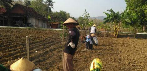 Petani mengolah lahan untuk persiapan menanam jagung