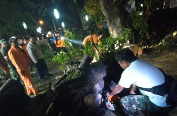 Pohon tumbang akibat angin kencang di Cepu