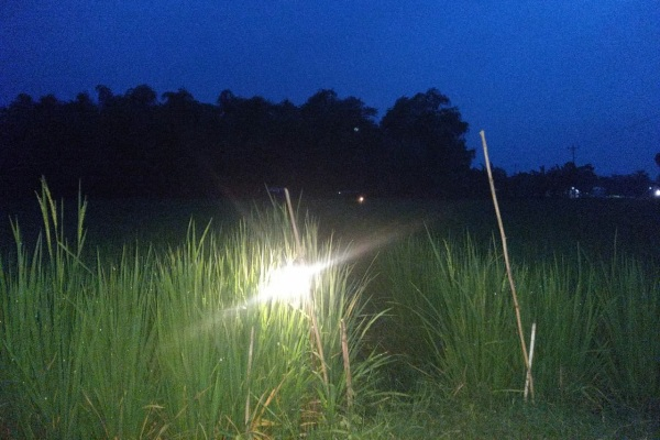 Jebakan tikus bertegangan listrik di Kecamatan Kedungtuban Kabupaten Blora