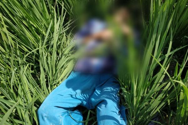 Kondisi mayat petani bernama Margi (52) saat ditemukan di persawahan Dusun Gumiring Desa Sidomulyo Kecamatan Banjarejo Kabupaten Blora