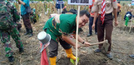 Wakil Bupati Blora Arief Rohman ikut serta dalam aksi tanam pohon di petak 40 BKPH Ngliron KPH Randublatung, Kecamatan Randublatung Kabupaten Blora