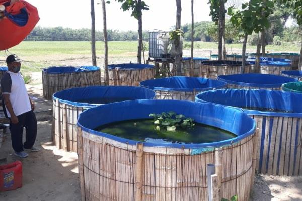 Kolam lele di desa Gotputuk Kecamatan Ngawen
