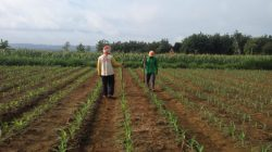 INI HARAPAN PETANI BLORA DI HARI ULANG TAHUN REPUBLIK INDONESIA KE 76
